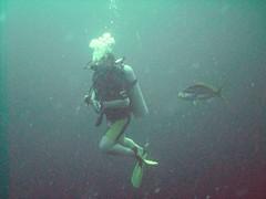 PICT0055 (JoseQ) Tags: blue mar hole great tiburones buceo caribe submarinismo tiburón