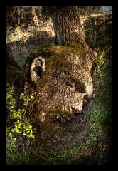 Leave No Tree Faceless (Josh Sommers) Tags: wood man tree texture face moss profile bark ent blend weekendamerica