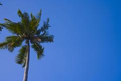Nov07 (Mr Jollybox) Tags: thailand coconuts tress