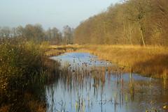 landscape (atsjebosma) Tags: wood autumn trees sun reflection water duck bomen ditch herfst groningen bos eend sloot reflectie