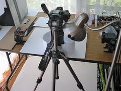 Fossil macro pano setup shot (neilcreek) Tags: camera panorama macro closeup canon 350d flash tubes setup extension vivitar 580ex extensiontubes 285hv