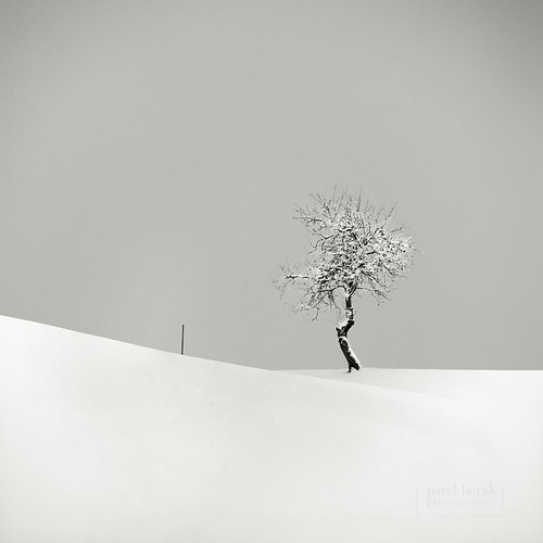 The Tree and The Pole / Pavel Horák