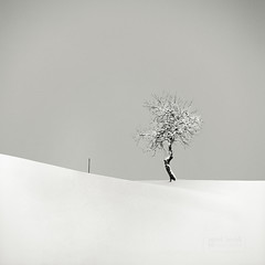 The Tree and The Pole (Vincnt) Tags: winter sky snow tree 6x6 zeiss pole hasselblad squareformat czechrepublic minimalism zima strom vincentvega obloha greatphotographers snh 503cw fujineopanacros100 ilfordrapidfixer snowstick goingwiththeflow anawesomeshot nikonsupercoolscan9000ed sonnarcf1804t adoublefave proudshopper ilfordilsols pavelhork kl bestminimalshot