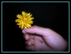 ~~~fRoM mE tO yOu (^-~)~~~ (Queenscents) Tags: black flower yellow japan lights photo flickr hand mums gift frame mintgreen driedflower strawflower blueribbonwinner platinumphoto diamondclassphotographer flickrdiamond queenscents goldstaraward