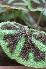 Bumpy bromeliad leaf