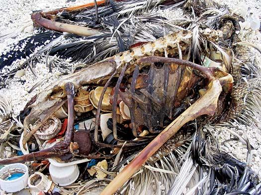 The Plastic Killing Fields