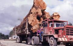 Logging (Pierre♪ à ♪VanCouver) Tags: logging forest canada queencharlotteislands britishcolumbia juskatla pierre hayes hayestruck haidagwaii