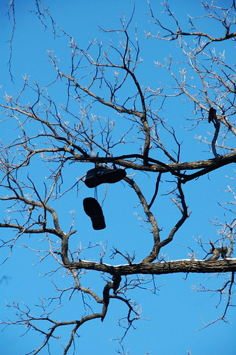 Shoes on the tree