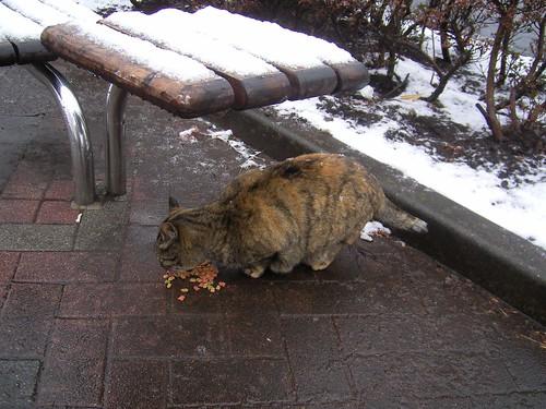 雪に負けないでゴハンを食べようね