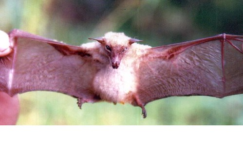 2230764512_252eef4966 - CRAZY ABOUT BATS! - Science and Research