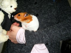 20080308 - 16 (kayako_) Tags: hamster pon