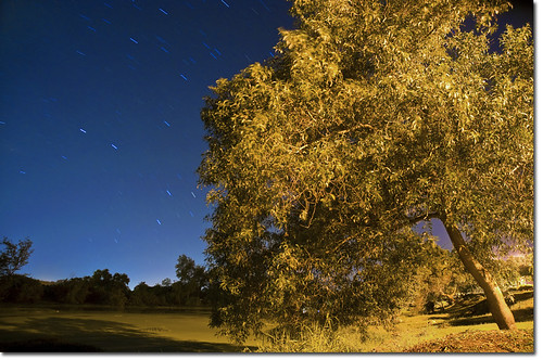 Star Trail over Tree