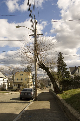That Tree Wants So Badly to Be that Telephone Poll.