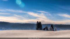 Blanche Neige (Fred&rique) Tags: lumixfz1000 photoshop hdr raw neige doubs hiver paysage nature champs sapins ciel bleu nuages soleil
