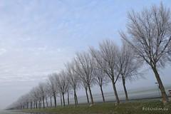 Winter in Waterland (boegheim_eu) Tags: landscape noordholland winter trees row bomen weg road waterland