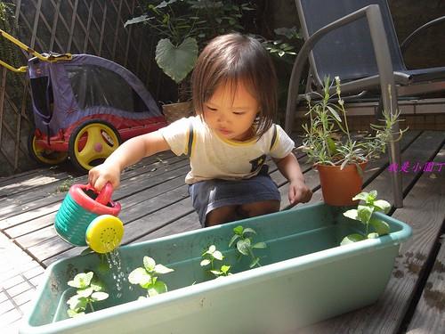 你拍攝的 1小園丁澆花。
