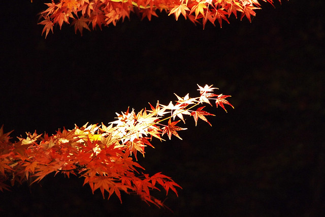 101128_180254_鎌倉_長谷寺