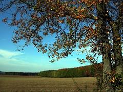 (:Linda:) Tags: autumn shadow sky cloud tree field forest germany woods village herbst wolke thuringia landschaft baum autumnal veilsdorf cloudysky wolkig herbstlich bewlkterhimmel autumnallandscape landschaftimherbst herbstlichelandschaft