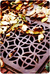Grate-ful for autumn (Ani-Bee) Tags: autumn fall leaves grate pattern ground differentpointofview