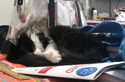Twinkle sleeping 1