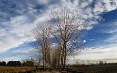 Over the Years and through the Woods (-N-Root-) Tags: blue trees winter sky italy alberi clouds italia nuvole blu country campagna piemonte cielo sentiero inverno footpath piedmont canavese sanbenigno sanbenignocanavese alessandronotario