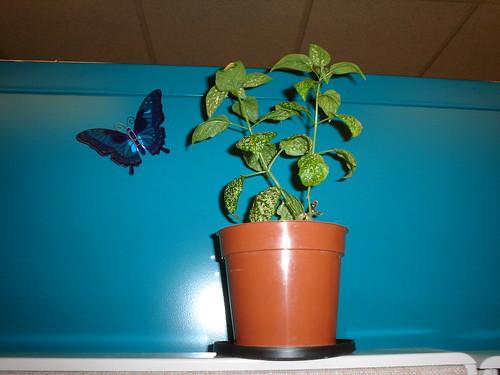 work_plant