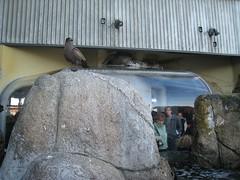 IMG_0843.JPG (joelaz) Tags: aquarium monterey acquarium