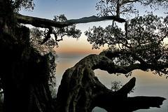 Lake Tana Sunrise (maksid) Tags: lake tree sunrise ethiopia tana mywinners abigfave flickrplatinum superbmasterpiece diamondclassphotographer ysplix theunforgettablepictures betterthangood goldstaraward