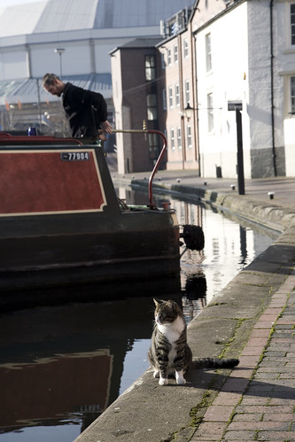 Canal Cat