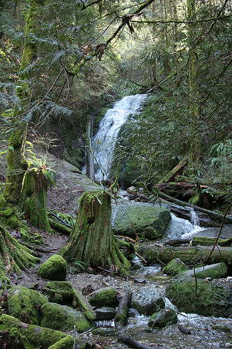 Coal Creek Falls - Cougar Mountain - Issaquah