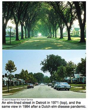 ElmTreesStreet