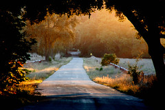 country road (artfilmusic) Tags: road country
