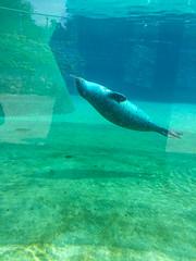 Harbor seal (melastmohican) Tags: sur sand cute mammal water monterey ocean california big elephant wildlife grey seal sea animal life outdoors beach nature coast marine san