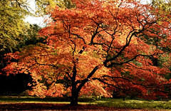 Westonbirt (-terry-) Tags: autumn tree fall flickr cotswolds explore westonbirt aboretum naturesfinest flickrexplore nationalaboretum seeninexplore anawesomeshot flickrchallengewinner