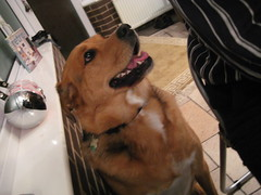 Thanksgiving (6) (chicgeekuk) Tags: thanksgiving york uk friends food dog laura dinner united kingdom kishimoto fatta finny laurakishimoto laurakishimotoca finneil