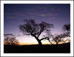 oak against dawn sky (on2wheelz) Tags: color silhouette sunrise landscape dawn photo interesting oak flickr marin creative olympus fave sanrafael zuiko soe oly theoak blueribbonwinner 1454mm interestingness237 explored marinwood abigfave jeffav jeffav2007 explore20071222 grasshopperhill