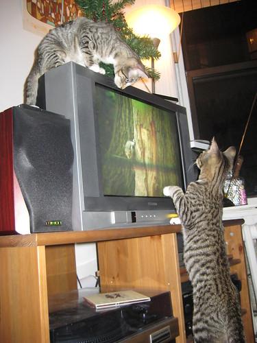 kitties watching video catnip