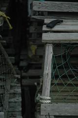 DSC_0549 (LizardEye) Tags: scenic bourne wareham