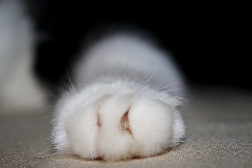 sugar toes