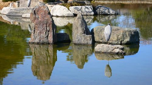 Japanese Garden@Ohori Park