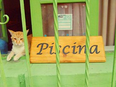 Me canse de seguir palomas... (( Vicenta )) Tags: chile pet hot color verde green water cat coquimbo agua piscina gato turismo mascota calor elqui valledelelqui