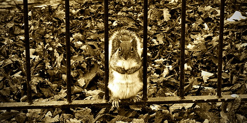 Behind bars squirrel
