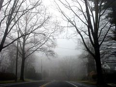 through the trees (alankin) Tags: trees 15fav philadelphia fog pennsylvania pavement branches philly roads mountairy ontheroad 50views fromthecar inmotion mtairy canonpowershot a610 almostmonochromatic niknala 14dec2006 wclivedenstreet 0900014cu