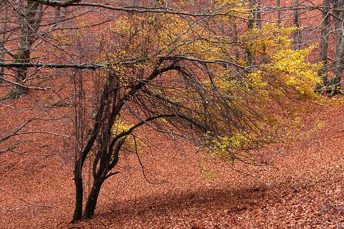 autunno a camposecco