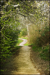 spring walk (vcrimson) Tags: nottingham flowers trees england spring path blossoms trail buds bulwell