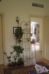 Building the orchid wall