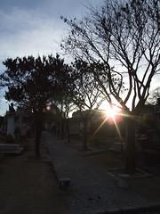 Sun's Glare in Montparnasse Cemetery (cheesemonster) Tags: paris france frankreich ledefrance frankrijk francia rp    rgionparisienne parisregion