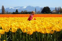 Le Petit Voleur (AsherBlue) Tags: blue sky flower nature floral beauty sunshine yellow children happy washington spring colorful joy