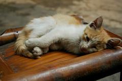 2008-0510-cat12