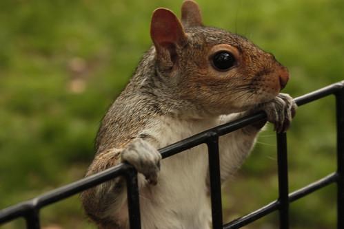 Squirrel at Washington Square Park